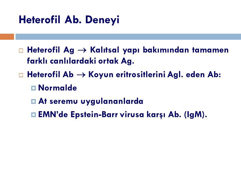 Heterofil Ab. Deneyi Heterofil Ag  Kalıtsal yapı bakımından tamamen farklı canlılardaki ortak Ag.