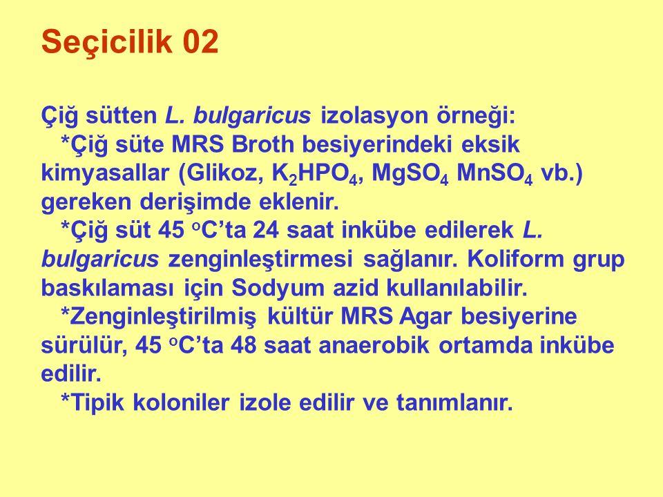 Seçicilik 02 Çiğ sütten L. bulgaricus izolasyon örneği: