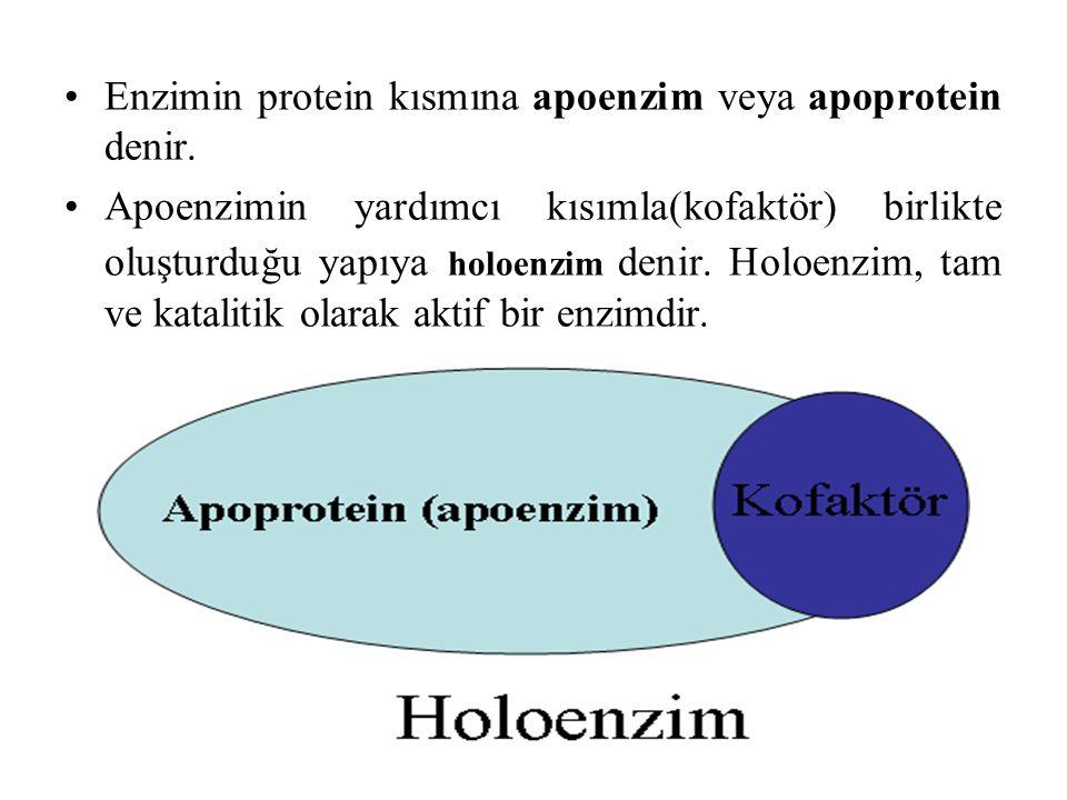 Enzimin protein kısmına apoenzim veya apoprotein denir.