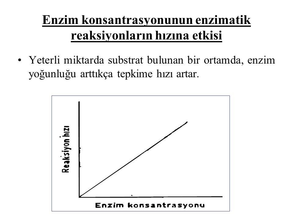 Enzim konsantrasyonunun enzimatik reaksiyonların hızına etkisi