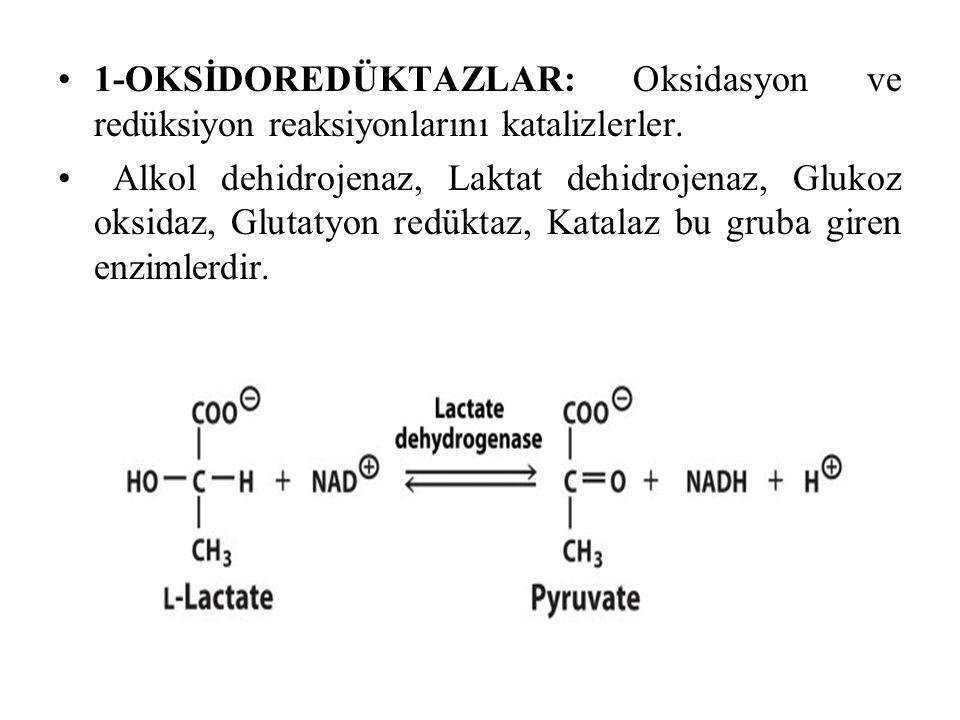 1-OKSİDOREDÜKTAZLAR: Oksidasyon ve redüksiyon reaksiyonlarını katalizlerler.