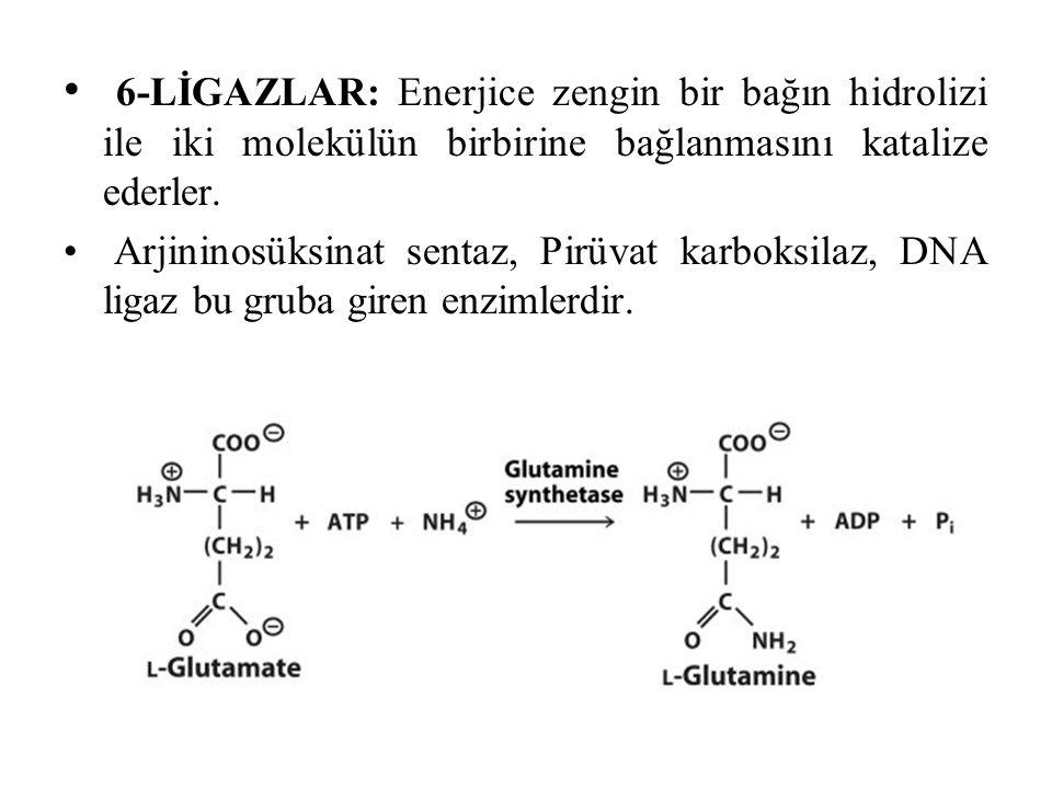 6-LİGAZLAR: Enerjice zengin bir bağın hidrolizi ile iki molekülün birbirine bağlanmasını katalize ederler.