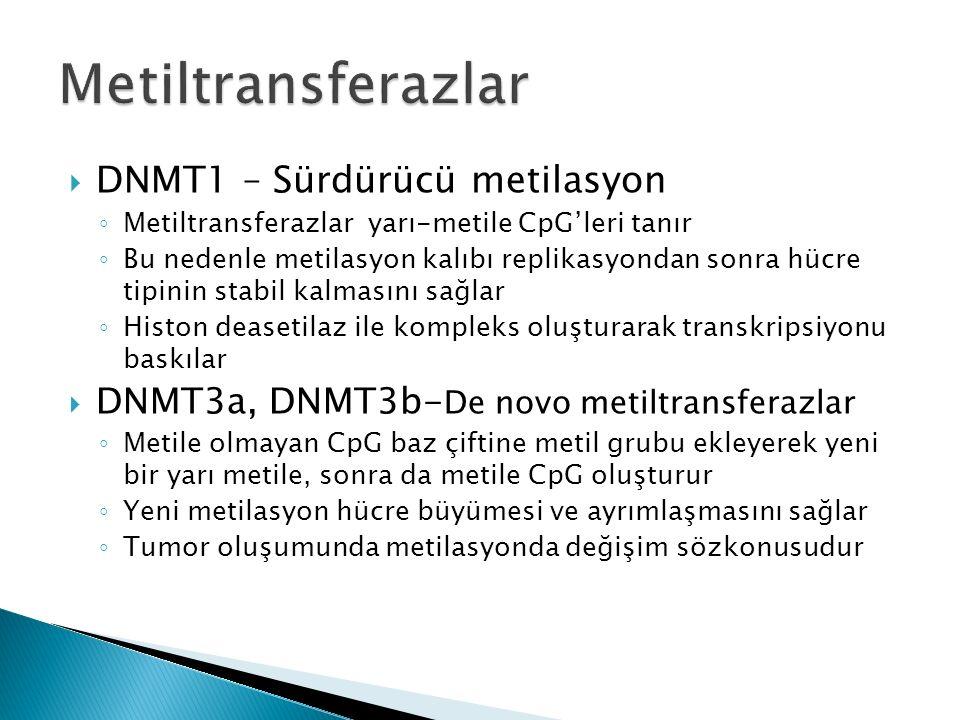 Metiltransferazlar DNMT1 – Sürdürücü metilasyon