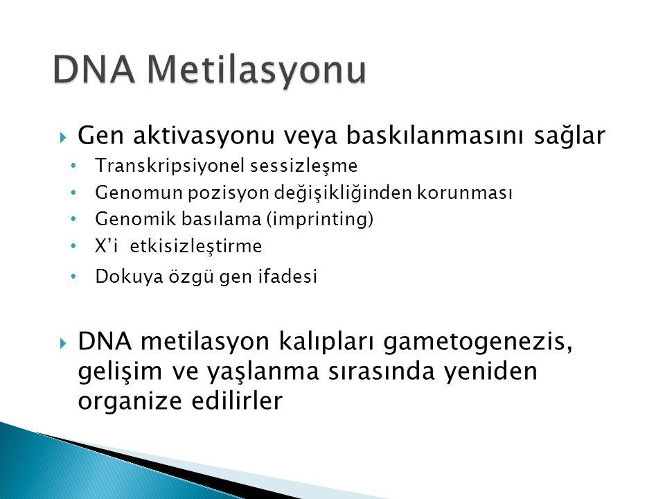 DNA Metilasyonu Gen aktivasyonu veya baskılanmasını sağlar