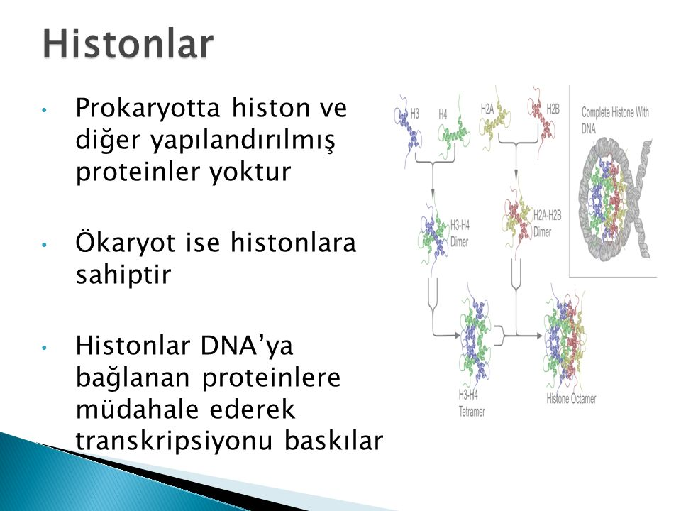 Histonlar Prokaryotta histon ve diğer yapılandırılmış proteinler yoktur. Ökaryot ise histonlara sahiptir.