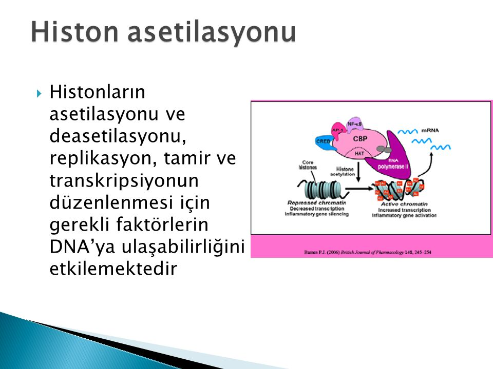 Histon asetilasyonu