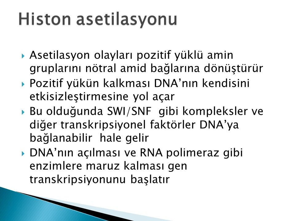 Histon asetilasyonu Asetilasyon olayları pozitif yüklü amin gruplarını nötral amid bağlarına dönüştürür.