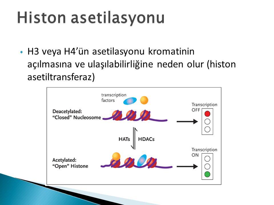 Histon asetilasyonu H3 veya H4'ün asetilasyonu kromatinin açılmasına ve ulaşılabilirliğine neden olur (histon asetiltransferaz)