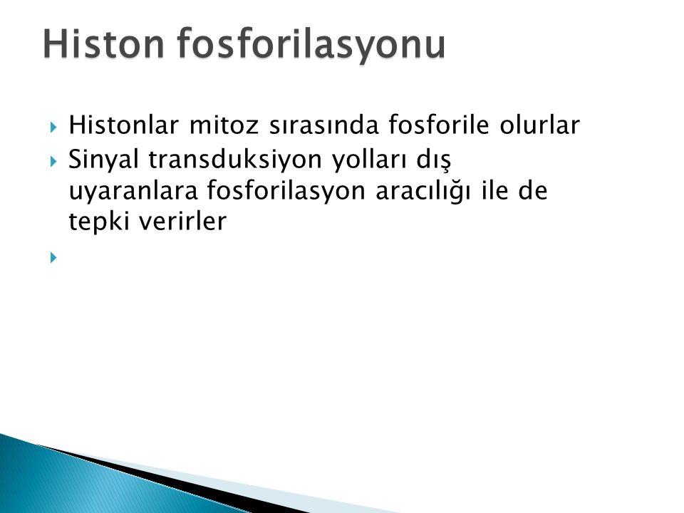 Histon fosforilasyonu