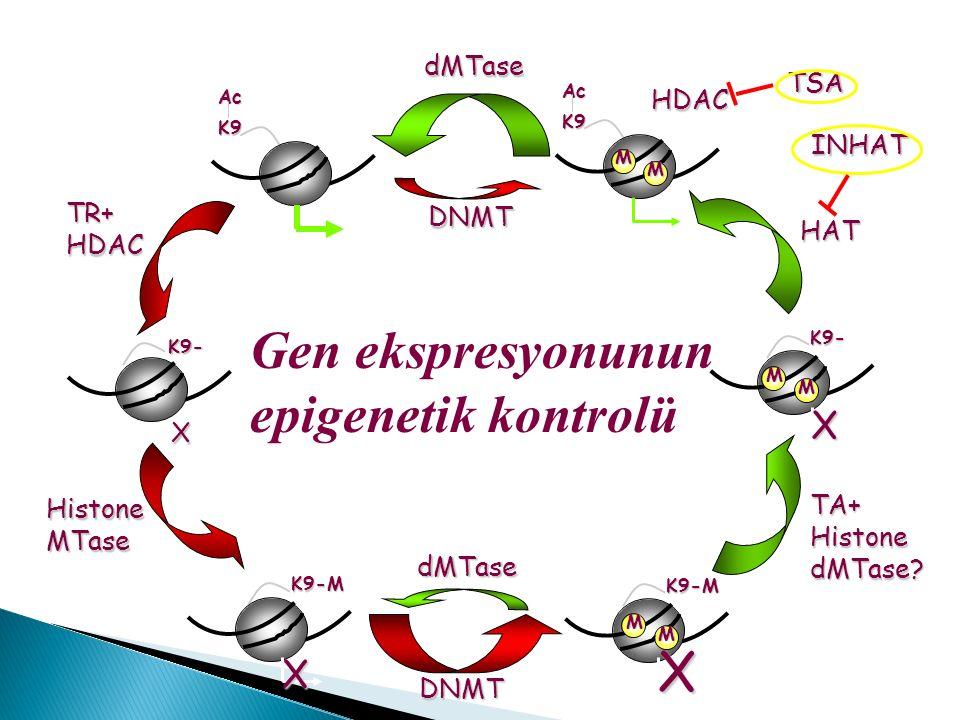Gen ekspresyonunun epigenetik kontrolü