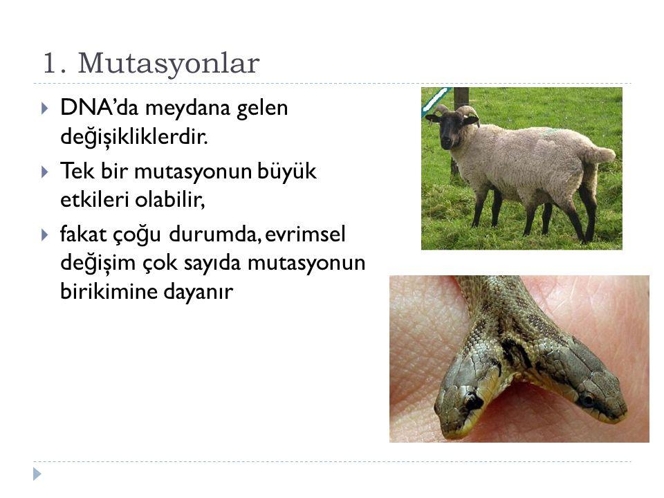 1. Mutasyonlar DNA'da meydana gelen değişikliklerdir.