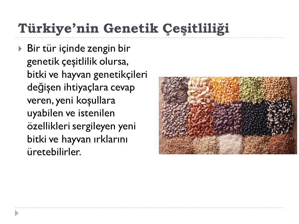 Türkiye'nin Genetik Çeşitliliği