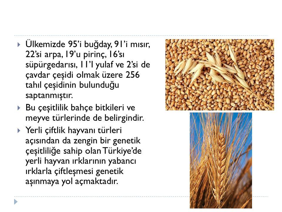 Ülkemizde 95'i buğday, 91'i mısır, 22'si arpa, 19'u pirinç, 16'sı süpürgedarısı, 11'I yulaf ve 2'si de çavdar çeşidi olmak üzere 256 tahıl çeşidinin bulunduğu saptanmıştır.