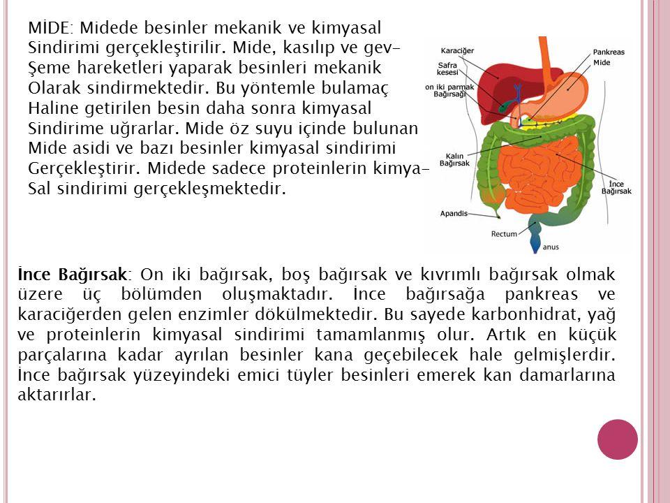 MİDE: Midede besinler mekanik ve kimyasal