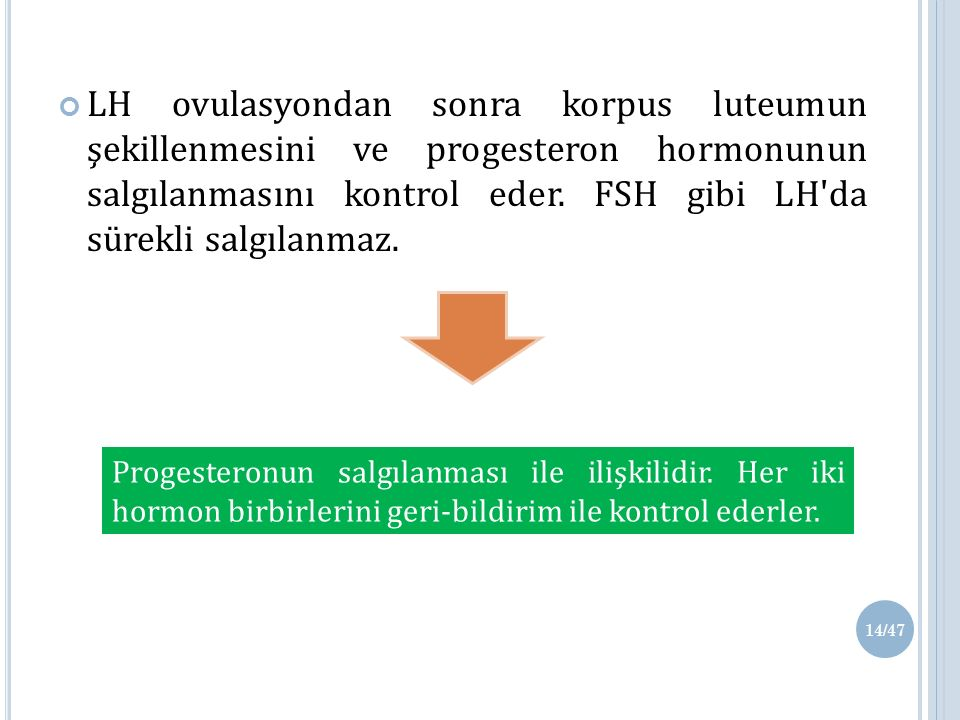 LH ovulasyondan sonra korpus luteumun şekillenmesini ve progesteron hormonunun salgılanmasını kontrol eder. FSH gibi LH da sürekli salgılanmaz.