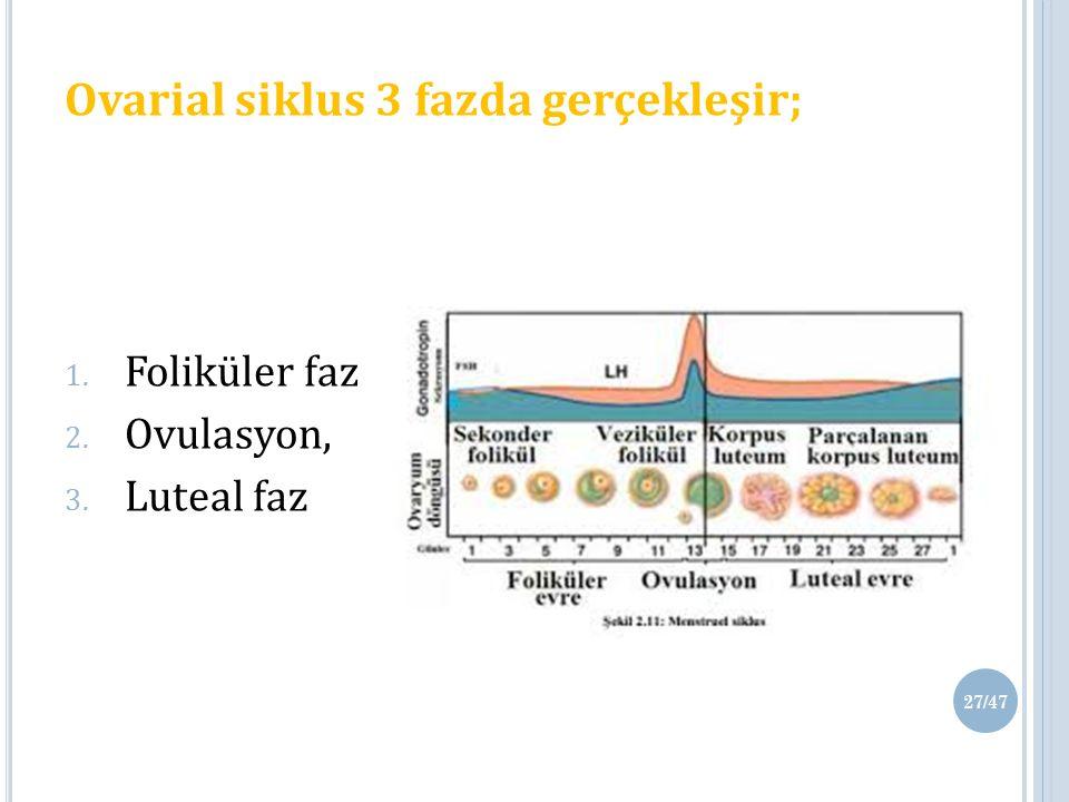 Ovarial siklus 3 fazda gerçekleşir;