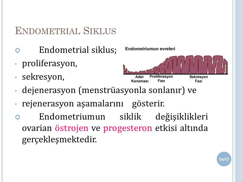 Endometrial Siklus Endometrial siklus; proliferasyon, sekresyon,