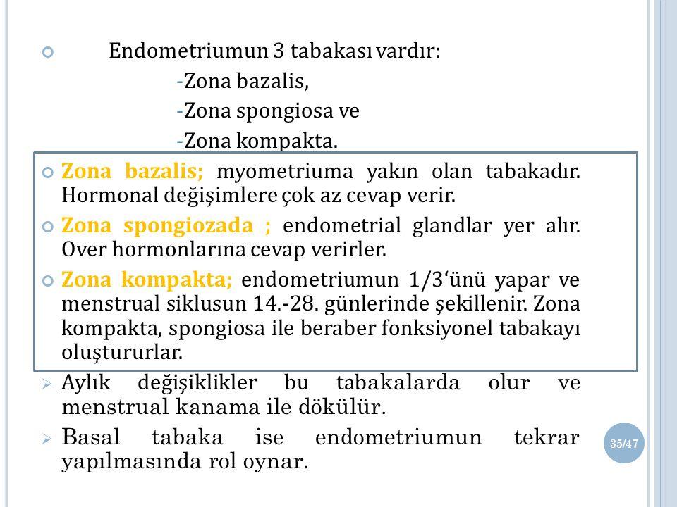 Endometriumun 3 tabakası vardır: