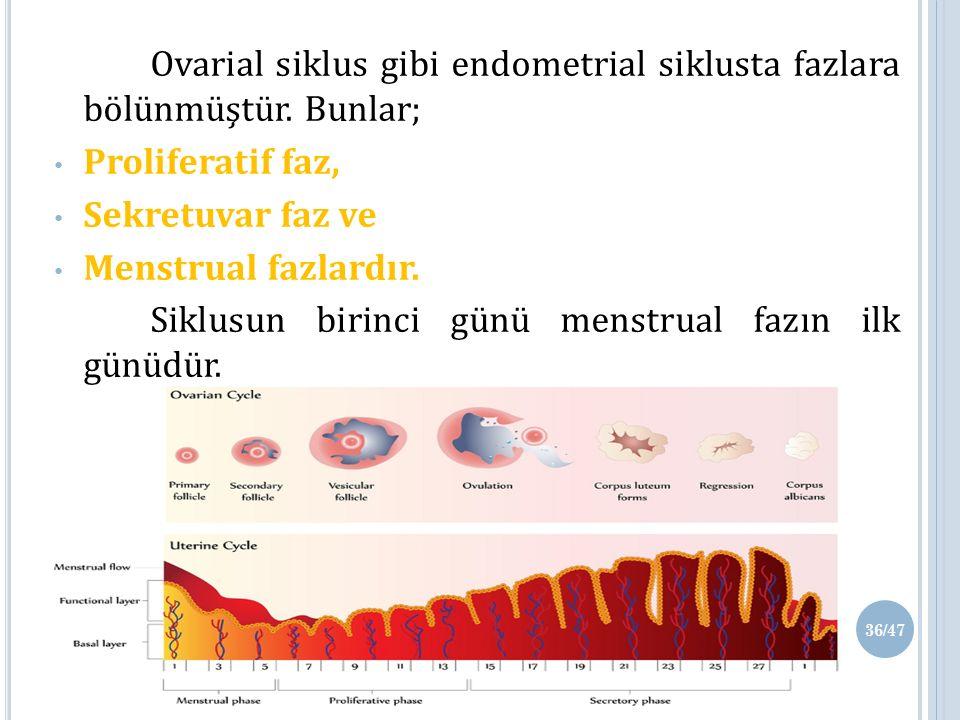 Siklusun birinci günü menstrual fazın ilk günüdür.