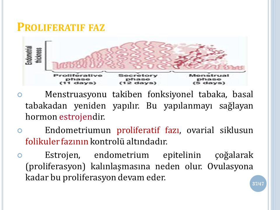 Proliferatif faz Menstruasyonu takiben fonksiyonel tabaka, basal tabakadan yeniden yapılır. Bu yapılanmayı sağlayan hormon estrojendir.