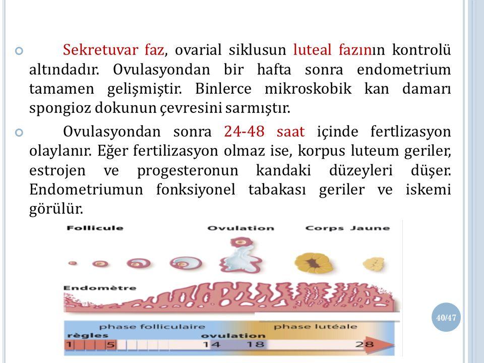 Sekretuvar faz, ovarial siklusun luteal fazının kontrolü altındadır