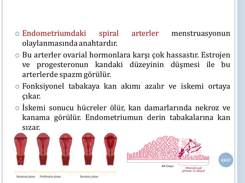 Endometriumdaki spiral arterler menstruasyonun olaylanmasında anahtardır.