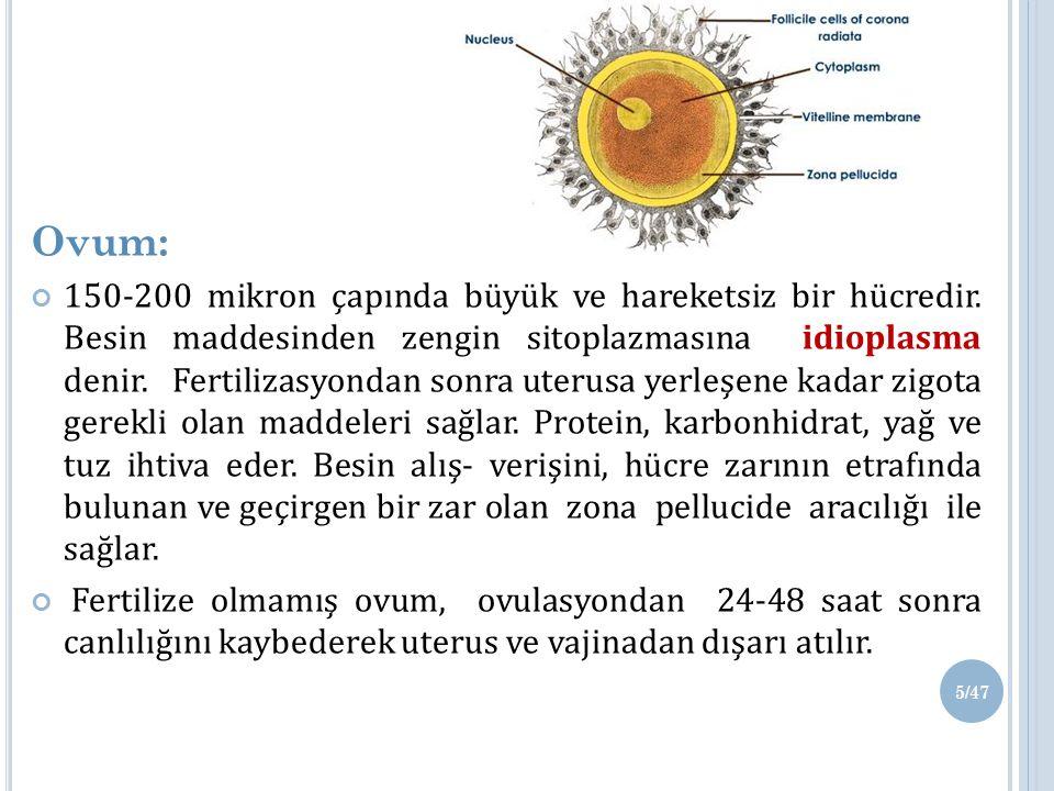 Ovum: