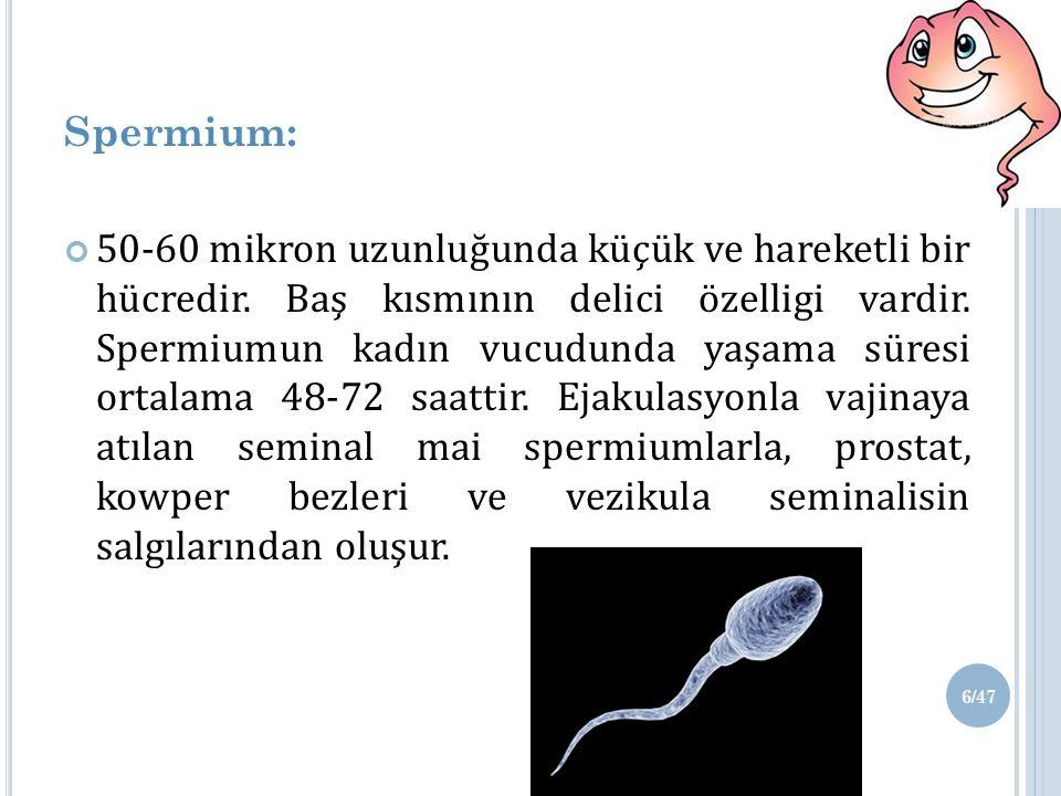 Spermium: