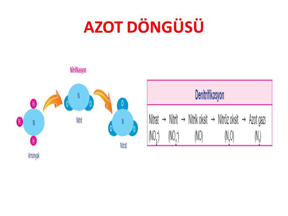 AZOT DÖNGÜSÜ 10FL