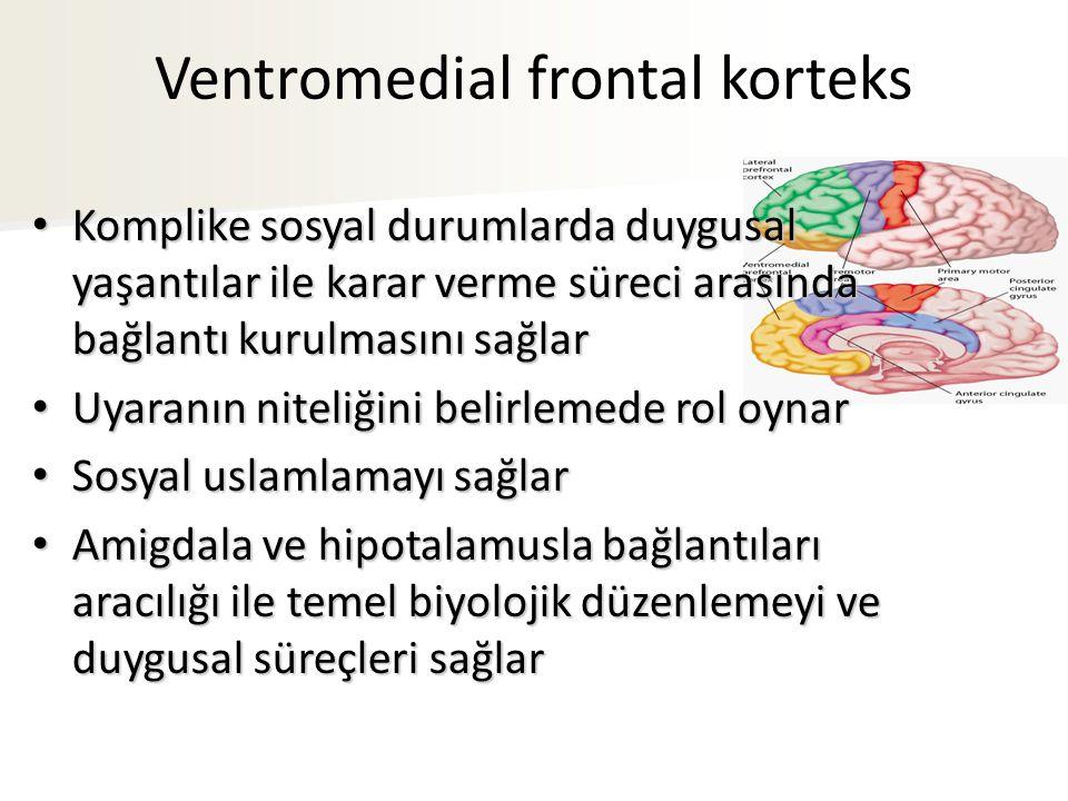 Ventromedial frontal korteks