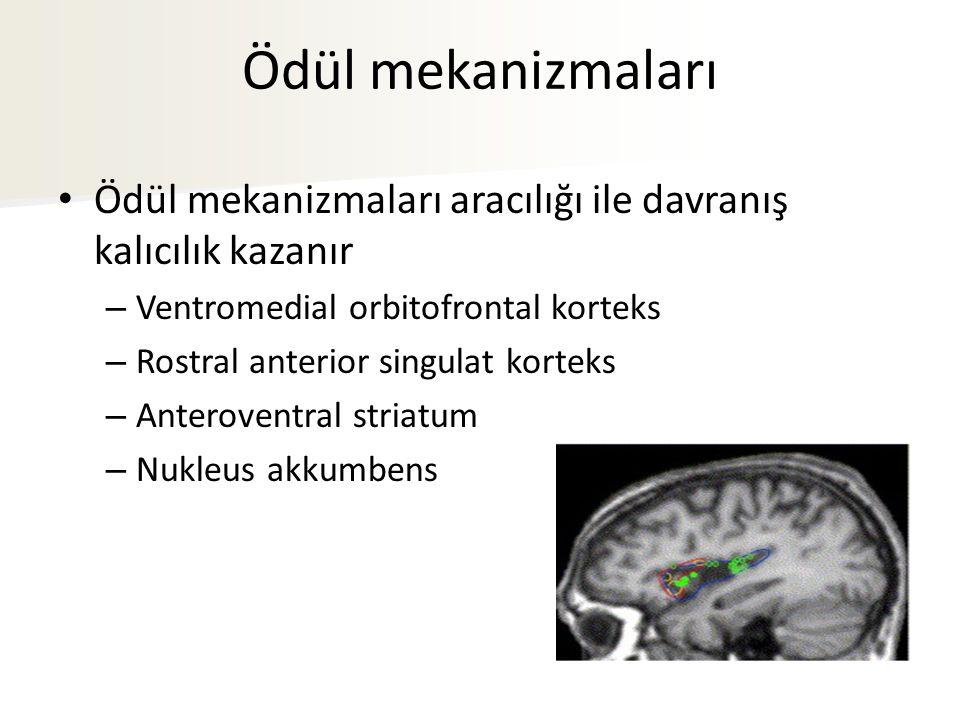 Ödül mekanizmaları Ödül mekanizmaları aracılığı ile davranış kalıcılık kazanır. Ventromedial orbitofrontal korteks.