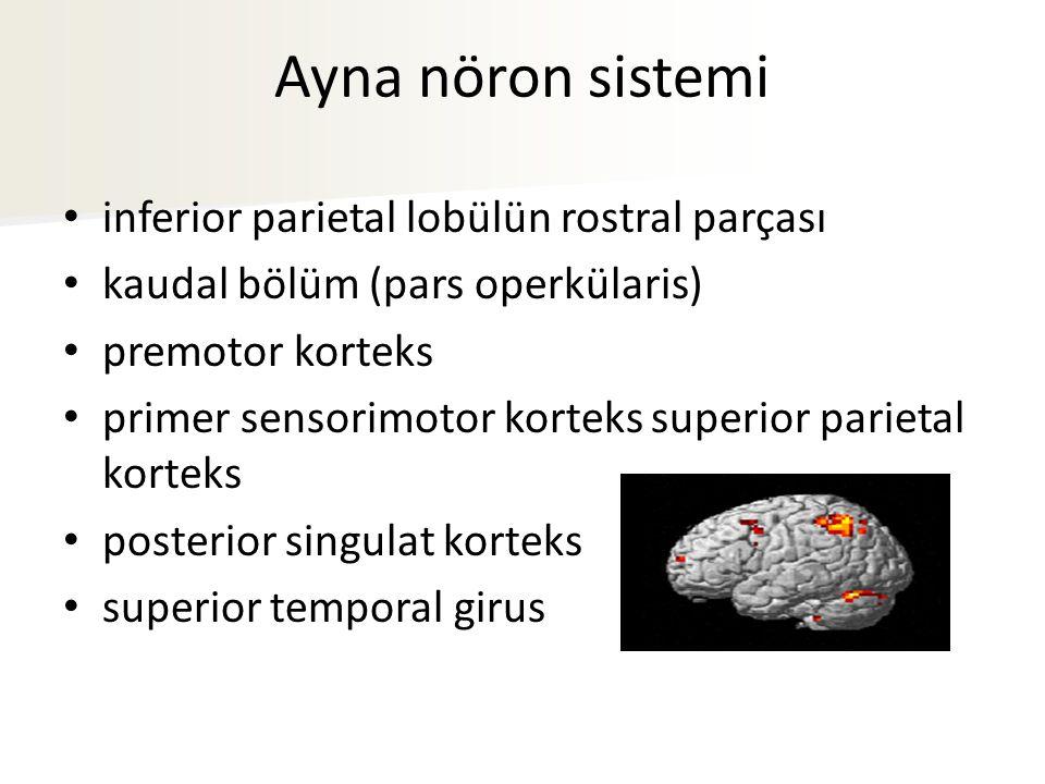 Ayna nöron sistemi inferior parietal lobülün rostral parçası