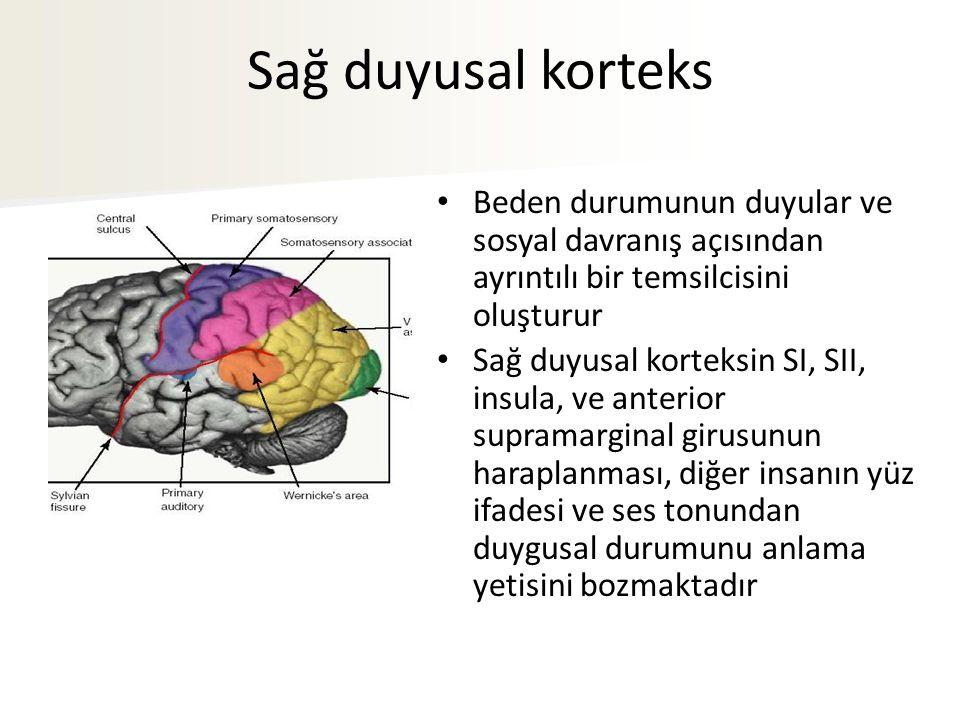Sağ duyusal korteks Beden durumunun duyular ve sosyal davranış açısından ayrıntılı bir temsilcisini oluşturur.