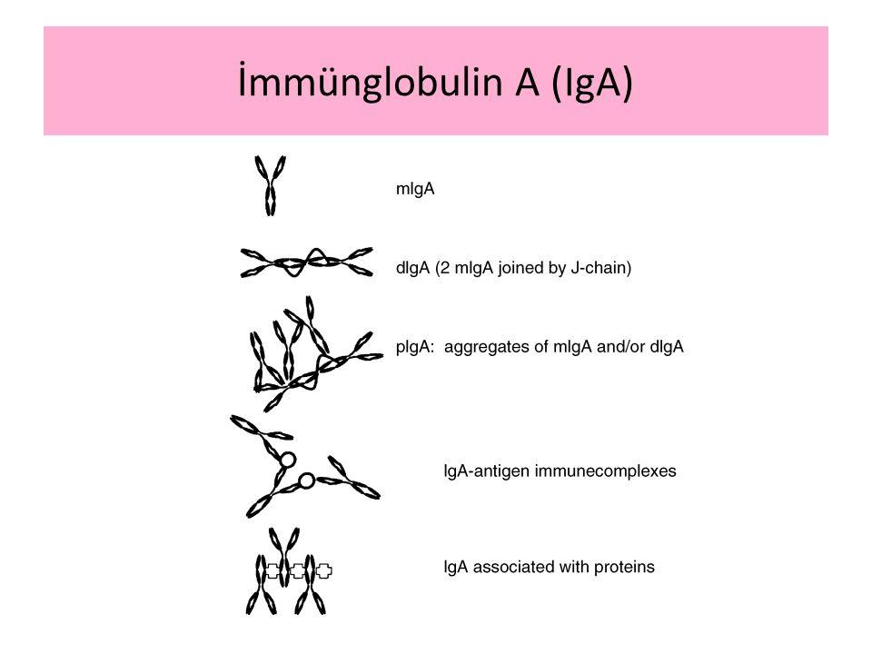 İmmünglobulin A (IgA)