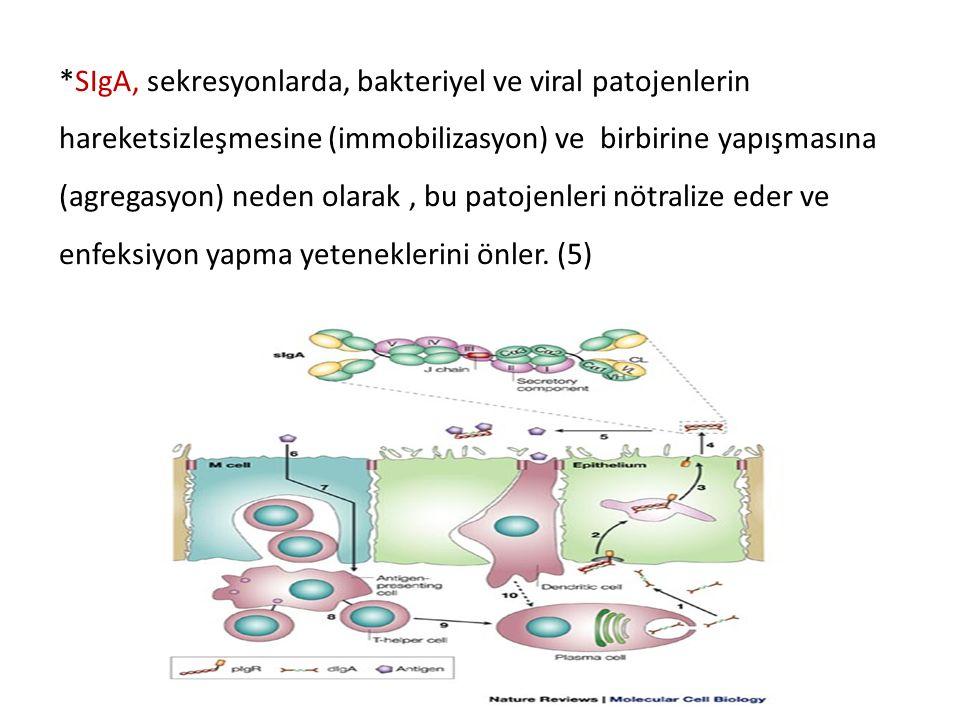 *SIgA, sekresyonlarda, bakteriyel ve viral patojenlerin hareketsizleşmesine (immobilizasyon) ve birbirine yapışmasına (agregasyon) neden olarak , bu patojenleri nötralize eder ve enfeksiyon yapma yeteneklerini önler.