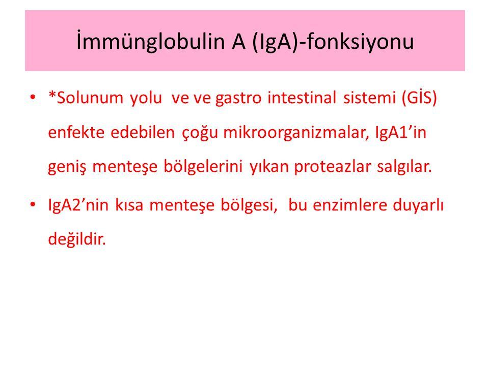 İmmünglobulin A (IgA)-fonksiyonu