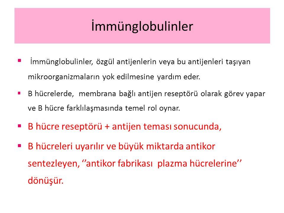 İmmünglobulinler İmmünglobulinler, özgül antijenlerin veya bu antijenleri taşıyan mikroorganizmaların yok edilmesine yardım eder.