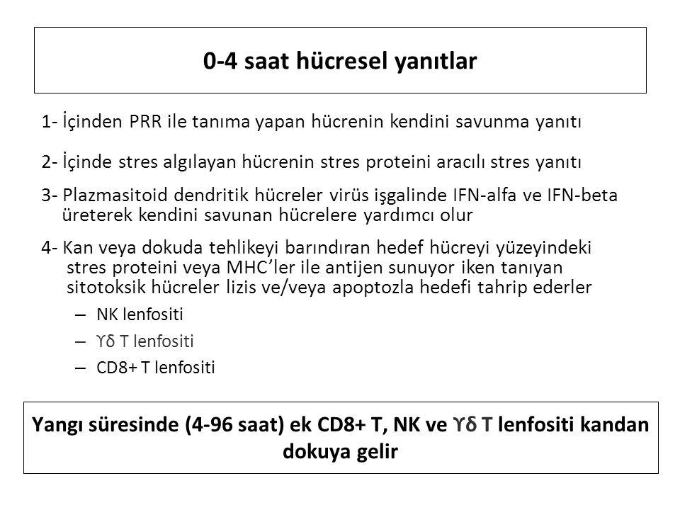 0-4 saat hücresel yanıtlar