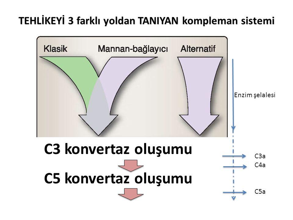 TEHLİKEYİ 3 farklı yoldan TANIYAN kompleman sistemi