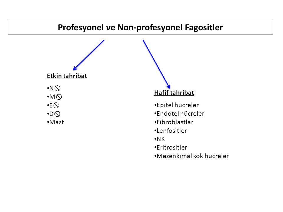Profesyonel ve Non-profesyonel Fagositler