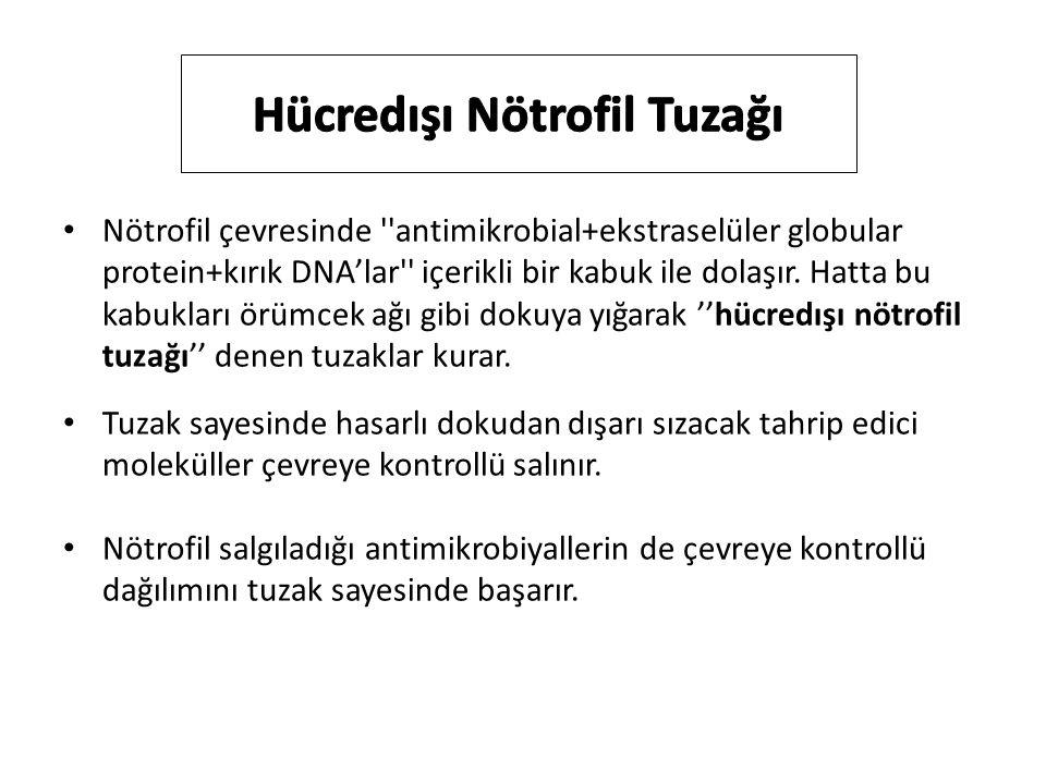 Hücredışı Nötrofil Tuzağı