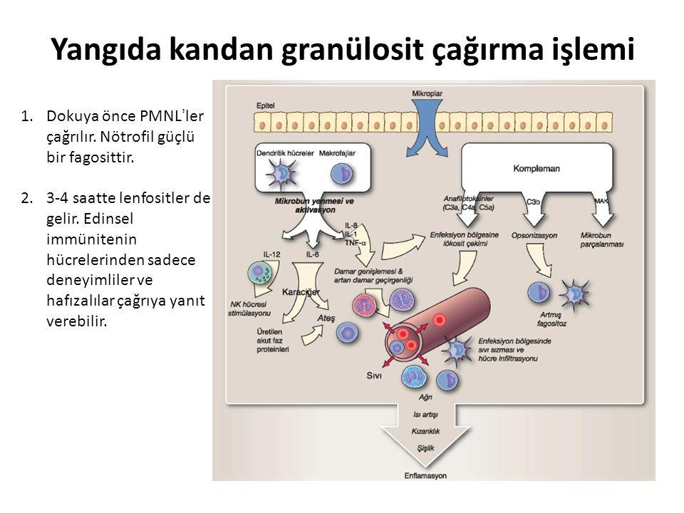 Yangıda kandan granülosit çağırma işlemi