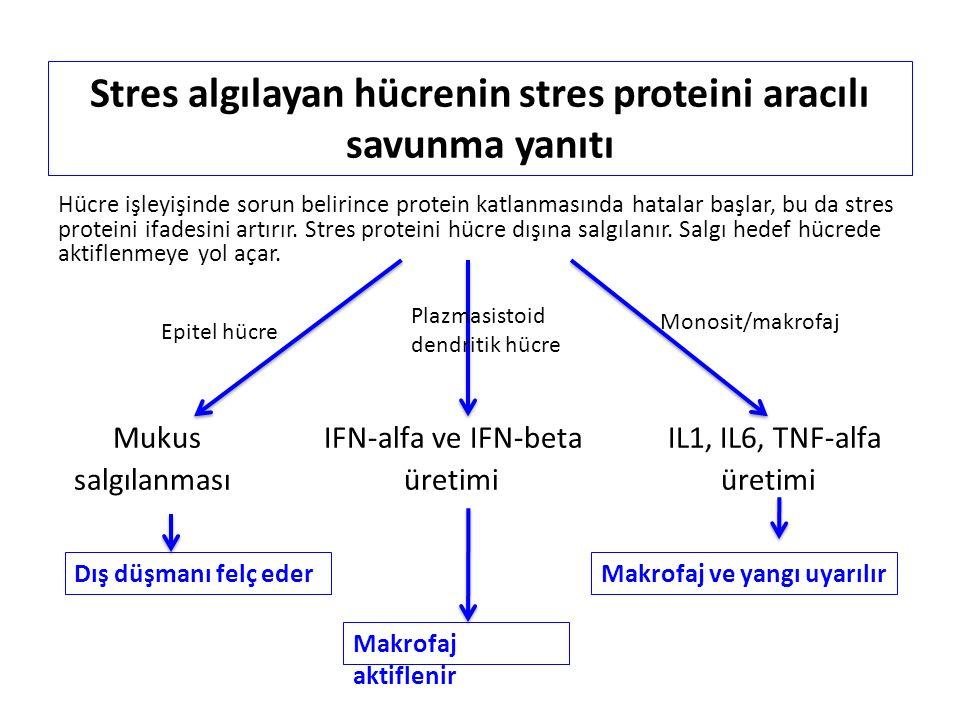 Stres algılayan hücrenin stres proteini aracılı savunma yanıtı