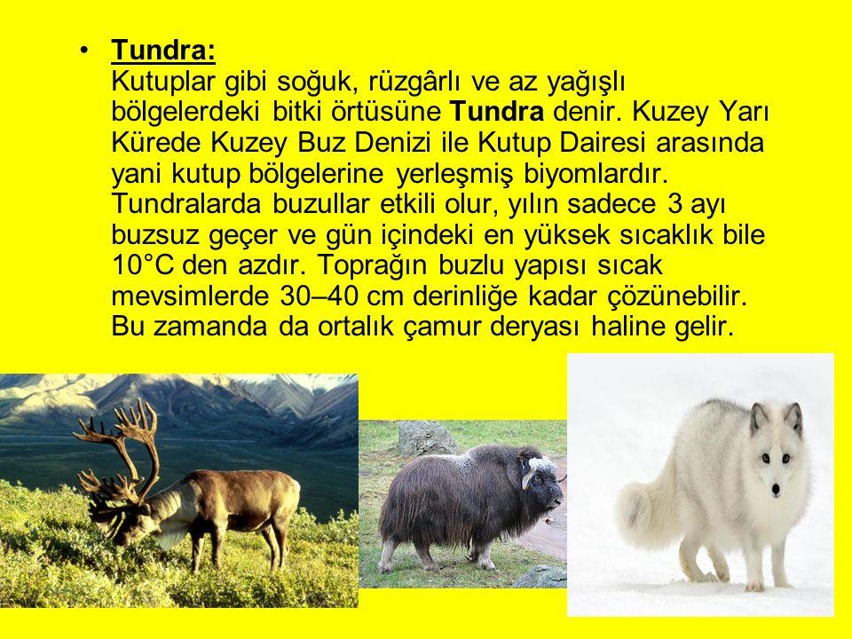 Tundra: Kutuplar gibi soğuk, rüzgârlı ve az yağışlı bölgelerdeki bitki örtüsüne Tundra denir.