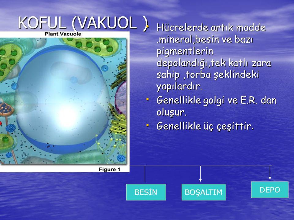 KOFUL (VAKUOL ) Hücrelerde artık madde .mineral,besin ve bazı pigmentlerin depolandığı,tek katlı zara sahip ,torba şeklindeki yapılardır.
