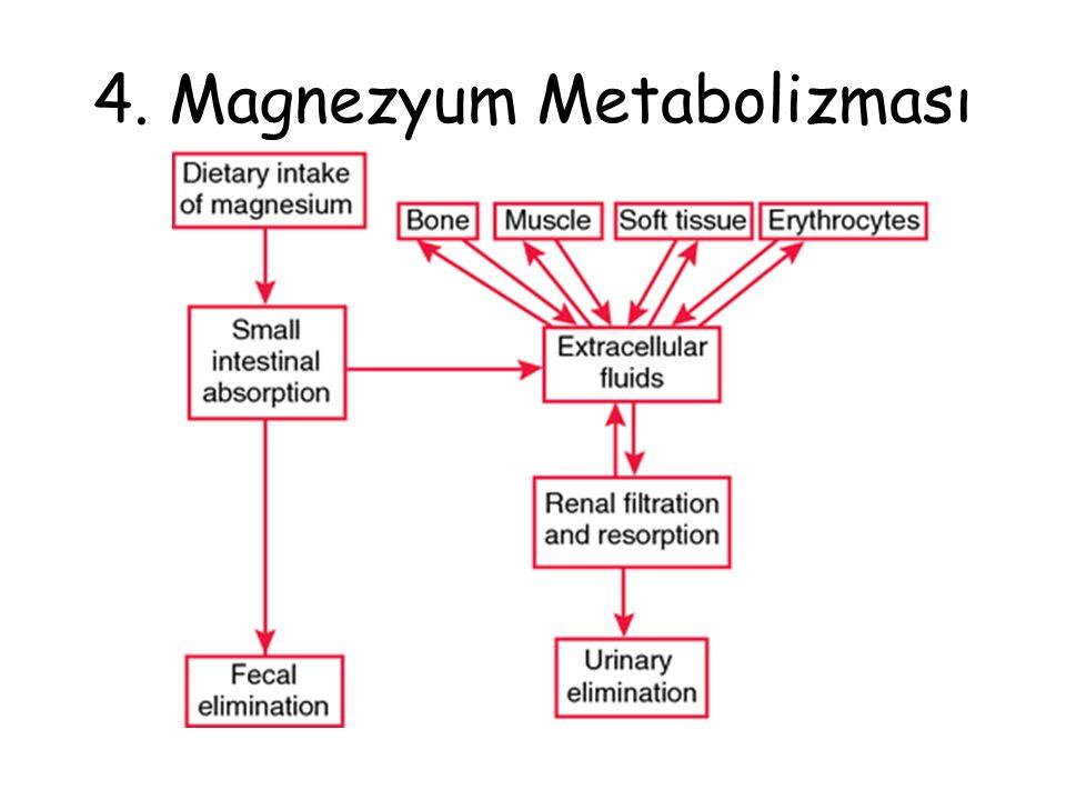 4. Magnezyum Metabolizması