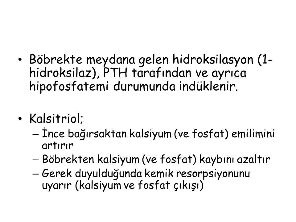 Böbrekte meydana gelen hidroksilasyon (1-hidroksilaz), PTH tarafından ve ayrıca hipofosfatemi durumunda indüklenir.