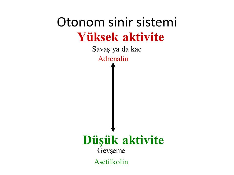 Otonom sinir sistemi Yüksek aktivite Düşük aktivite Savaş ya da kaç