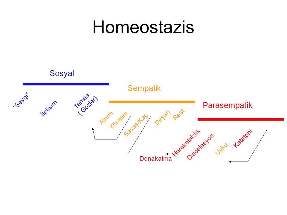 Homeostazis Sosyal Sempatik Parasempatik Sevgi Temas ( Gözler)