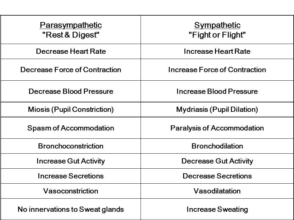 Parasympathetic Rest & Digest Sympathetic Fight or Flight